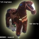 סוסי פוני לרכיבה